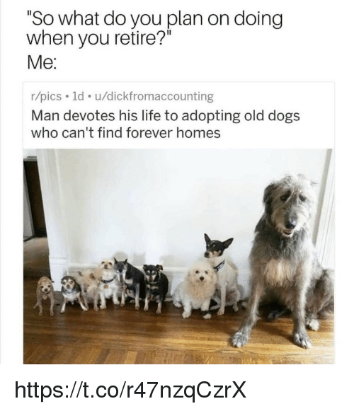 """Dogs, Life, and Memes: """"So what do you plan on doing  when you retire?""""  Me:  r/pics. 1d. u/dickfromaccounting  Man devotes his life to adopting old dogs  who can't find forever homes https://t.co/r47nzqCzrX"""