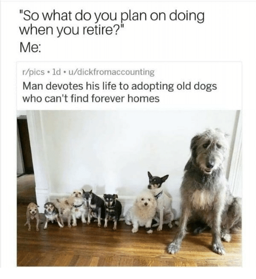 """Dogs, Life, and Memes: """"So what do you plan on doing  when you retire?  Me:  r/pics 1d u/dickfromaccounting  Man devotes his life to adopting old dogs  who can't find forever homes"""