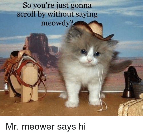 Youre, Just, and Gonna: So you're just gonna  scroll by without saying  meowdv? Mr. meower says hi