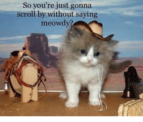 So You're Just Gonna Scroll by Without Saying Meowdy