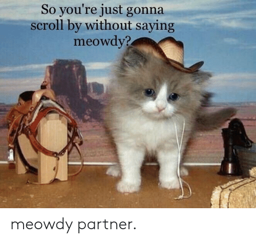 Youre, Just, and Gonna: So you're just gonna  scroll by without saying  meowdy? meowdy partner.