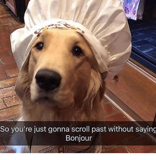 Bonjour, Youre, and Just: So you're just gonna scroll past without saying  Bonjour