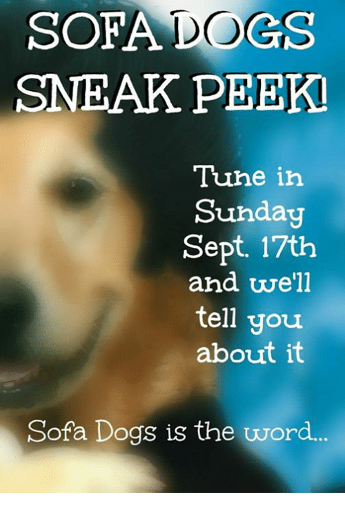 Dogs, Memes, and Word: SOFA DoGS  SNEAK PEEK  Tuhe irh  Sunday  Sept. 17th  and well  tell you  about it  Sofa Dogs is the word...