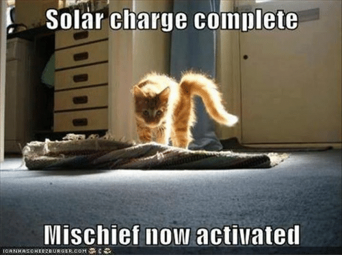 Memes, 🤖, and Com: Solar charge complete  Mischief now activated  ICANHASCHEEREURGER.COM