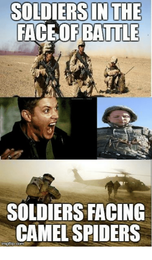 Soldiers In The Face Of Battle Soldiers Facing Camel Spiders