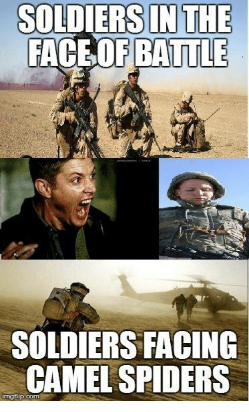 Soldiers, Spider, and Spiders: SOLDIERS IN THE  FACE OF BATTLE  SOLDIERS FACING  CAMEL SPIDERS  rngflip-come