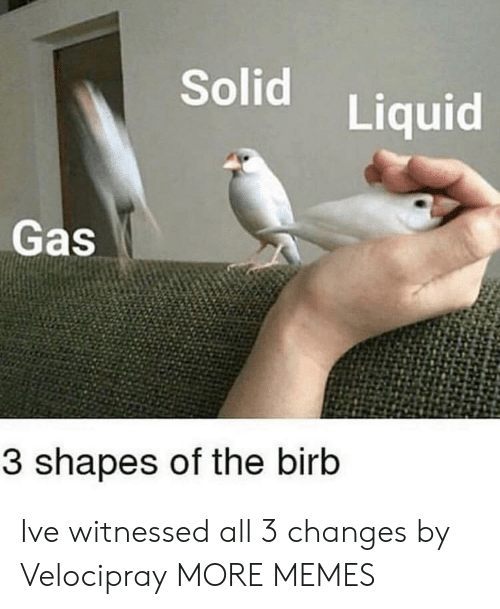 Dank, Memes, and Target: Solid  Liquid  Gas  3 shapes of the birb Ive witnessed all 3 changes by Velocipray MORE MEMES