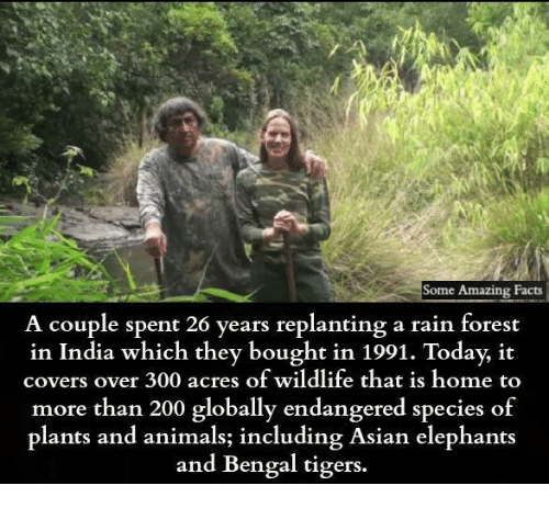 Animals, Asian, and Bailey Jay: Some Amazing Facts  A couple spent 26 years replanting a rain forest  in India which they bought in 1991. Today, it  covers over 300 acres of wildlite that is home to  more than 200 globally endangered species o  plants and animals; including Asian elephants  and Bengal tigers.