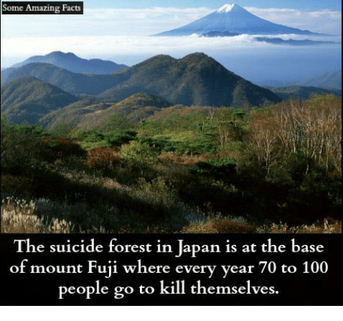 Some Amazing Facts the Suicide Forest in Japan Is at the