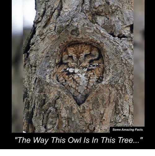 "Memes, 🤖, and Owl: Some Amazing Facts  ""The Way This Owl Is In This Tree..."""