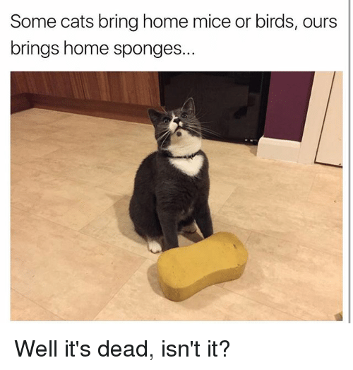 Cats, Funny, and Birds: Some cats bring home mice or birds, ours  brings home sponges. Well it's dead, isn't it?