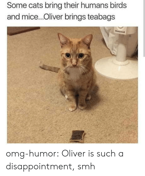 Cats, Omg, and Smh: Some cats bring their humans birds  and mice...Oliver brings teabags omg-humor:  Oliver is such a disappointment, smh
