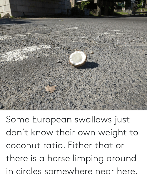 Horse, Circles, and Don: Some European swallows just don't know their own weight to coconut ratio. Either that or there is a horse limping around in circles somewhere near here.