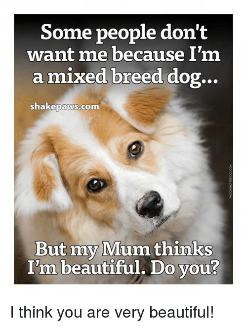 mix breed dog