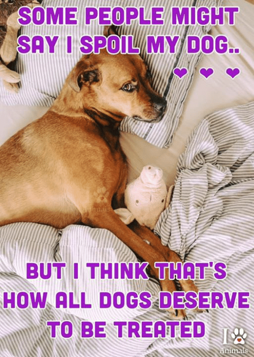 Dogs, Memes, and 🤖: SOME PEOPLE MIGHT  SAY I SPOILMY DOG  BUT I THINK THAT'S  HOW ALL DOGS DESERVE  TO BE TREATED