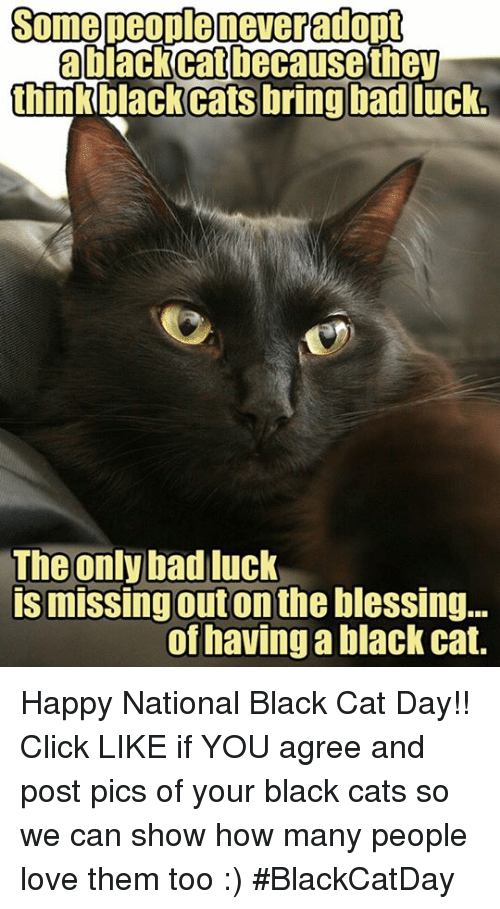 some people neveradont blackcat because they think black cats bring 6246129 search happy national cat day memes on me me