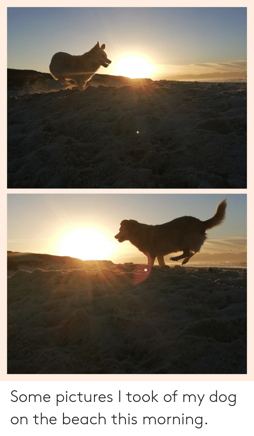Beach, Pictures, and Dog: Some pictures I took of my dog on the beach this morning.