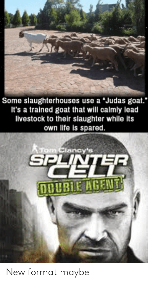 "Life, Goat, and Judas: Some slaughterhouses use a ""Judas goat.  It's a trained goat that will calmly lead  livestock to their slaughter while its  own life is spared.  KTom Clancy's  SPLINLTE  DOUBLE AGENT New format maybe"