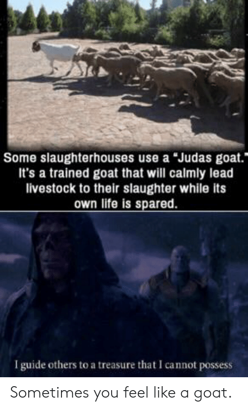 "Life, Goat, and Judas: Some slaughterhouses use a Judas goat.""  It's a trained goat that will calmly lead  livestock to their slaughter while its  own life is spared  I guide others to a treasure that I cannot possess Sometimes you feel like a goat."