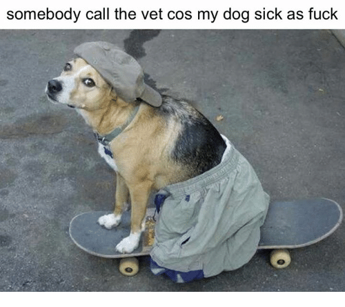 somebody call the vet cos my dog sick as fuck 3618352 somebody call the vet cos my dog sick as fuck dogs meme on me me
