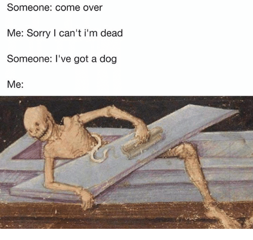 Come Over, Sorry, and Classical Art: Someone: come over  Me: Sorry I can't i'm dead  Someone: I've got a dog  Me