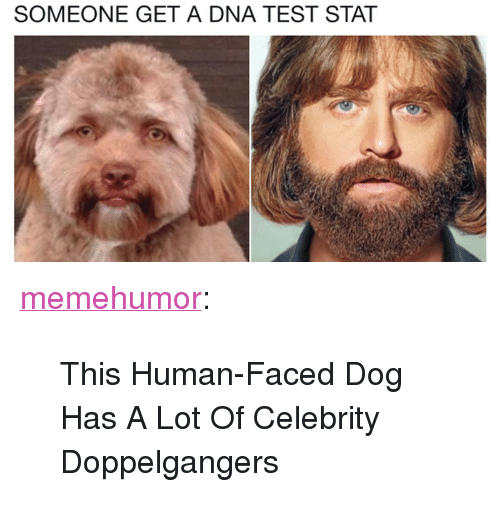 """Tumblr, Blog, and Http: SOMEONE GET A DNA TEST STAT <p><a href=""""http://memehumor.net/post/171855021356/this-human-faced-dog-has-a-lot-of-celebrity"""" class=""""tumblr_blog"""">memehumor</a>:</p>  <blockquote><p>This Human-Faced Dog Has A Lot Of Celebrity Doppelgangers</p></blockquote>"""