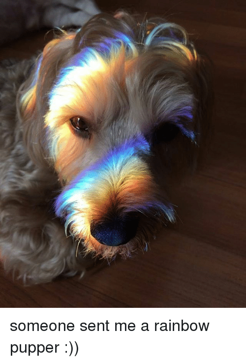 Memes, Rainbow, and 🤖: someone sent me a rainbow pupper :))