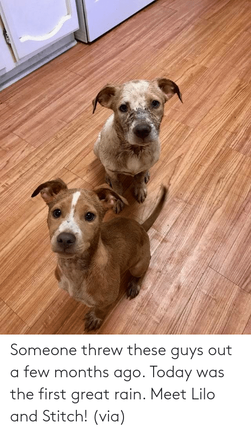 Aww, Reddit, and Target: Someone threw these guys out a few months ago. Today was the first great rain. Meet Lilo and Stitch!(via)