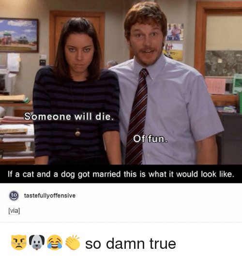 Someone Will Die of Fun if a Cat and a Dog Got Married This Is ...