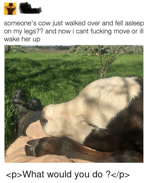 Fucking, Her, and Cow: someone's cow just walked over and fell asleep  on my legs?? and now i cant fucking move or ill  wake her up <p>What would you do ?</p>
