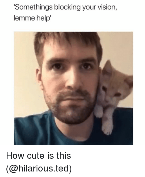 Cute, Funny, and Ted: Somethings blocking your vision,  lemme help' How cute is this (@hilarious.ted)