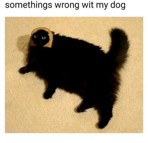 Dog, Wit, and  Wrong: somethings wrong wit my dog
