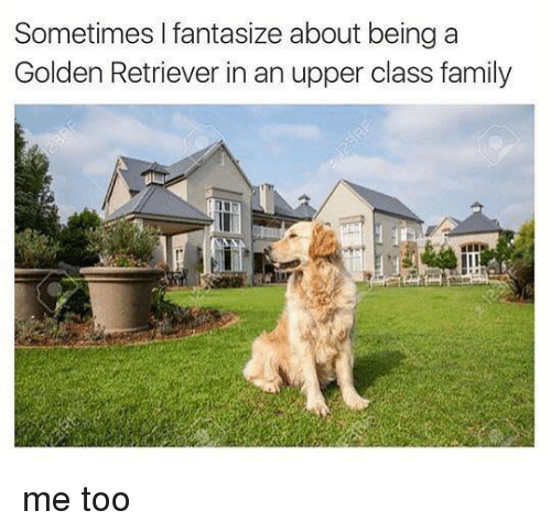 Family, Memes, and Golden Retriever: Sometimes I fantasize about being a  Golden Retriever in an upper class family me too