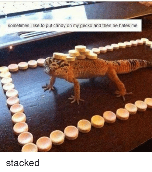 sometimes i like to put candy on my gecko and 18070211 25 best gecko memes fuuuuuuuuuu memes, snapchat filter memes