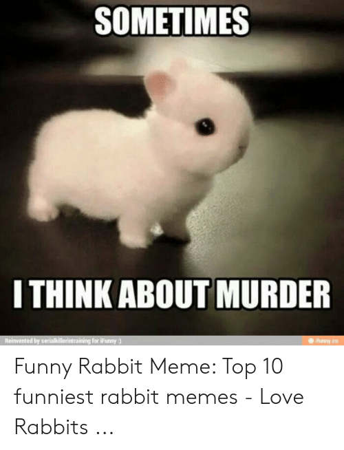 Bunny Shaming Funny Rabbit Cute Baby Bunnies Funny Bunnies
