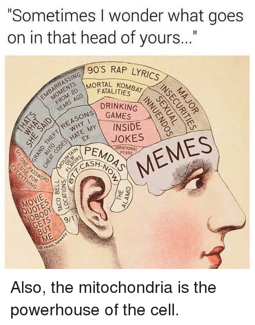 """Drinking, Head, and Memes: """"Sometimes I wonder what goes  on in that head of yours..""""  90'S RAP LYRICS  MORTAL KOMBAT o  FATALITIES  ON GAMES  PEMDAS  DRINKING  MY\ INSIDE  RRATIONAL  CASH  HING  MOVIE  NOBODY O  GETS  QUOTES o  //19/11  BUT  ME  @sean Also, the mitochondria is the powerhouse of the cell."""