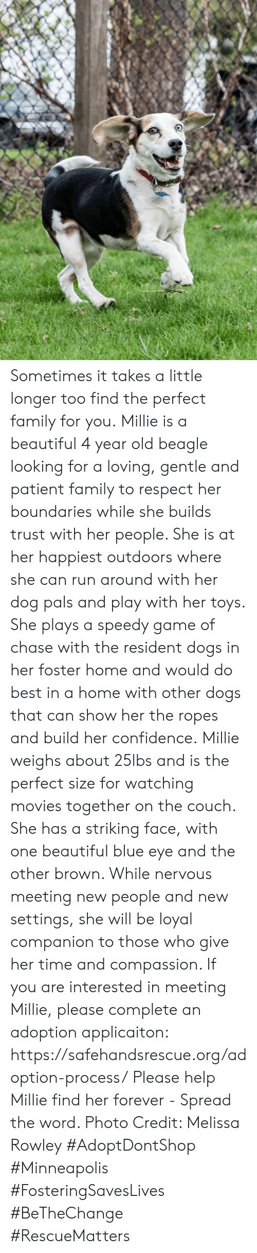Beautiful, Confidence, and Dogs: Sometimes it takes a little longer too find the perfect family for you.  Millie is a beautiful 4 year old beagle looking for a loving, gentle and patient family to respect her boundaries while she builds trust with her people.  She is at her happiest outdoors where she can run around with her dog pals and play with her toys.  She plays a speedy game of chase with the resident dogs in her foster home and would do best in a home with other dogs that can show her the ropes and build her confidence.  Millie weighs about 25lbs and is the perfect size for watching movies together on the couch.  She has a striking face, with one beautiful blue eye and the other brown. While nervous meeting new people and new settings, she will be loyal companion to those who give her time and compassion.   If you are interested in meeting Millie, please complete an adoption applicaiton: https://safehandsrescue.org/adoption-process/  Please help Millie find her forever - Spread the word.   Photo Credit: Melissa Rowley  #AdoptDontShop #Minneapolis #FosteringSavesLives #BeTheChange #RescueMatters