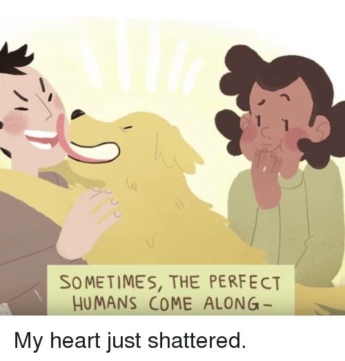 Memes, Heart, and Hearts: SOMETIMES, THE PERFECT  HUMANS COME ALONG My heart just shattered.