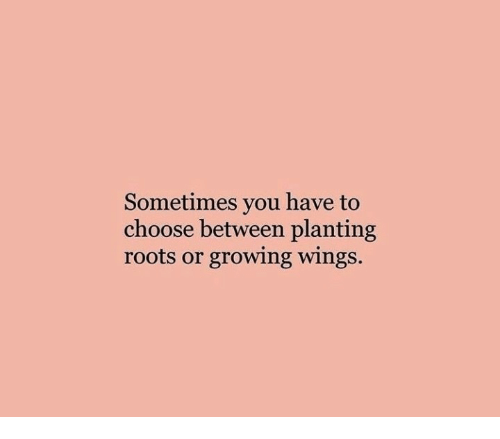 Wings, Roots, and You: Sometimes you have to  choose between planting  roots or growing wings.