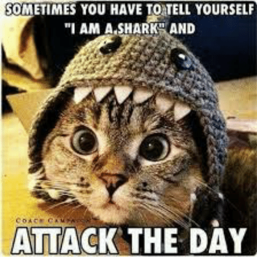 SOMETIMES YOU HAVE TO TELL YOURSELF I AM a SHARK AND ATTACK