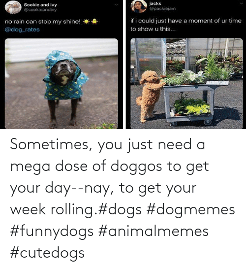 Dogs, Mega, and Day: Sometimes, you just need a mega dose of doggos to get your day--nay, to get your week rolling.#dogs #dogmemes #funnydogs #animalmemes #cutedogs
