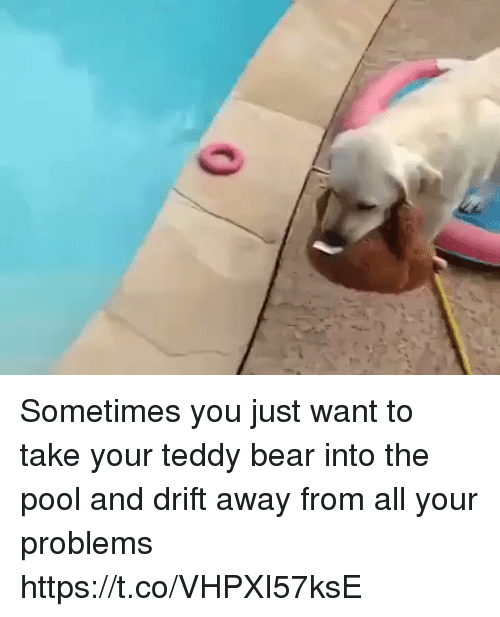 Bear, Pool, and Relatable: Sometimes you just want to take your teddy bear into the pool and drift away from all your problems https://t.co/VHPXI57ksE