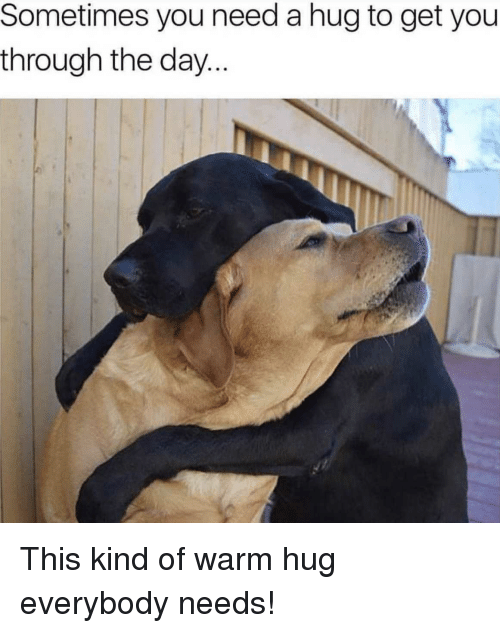 Been, Doggo, and Day: Sometimes you need a hug to get you  throughn the day... This kind of warm hug everybody needs!