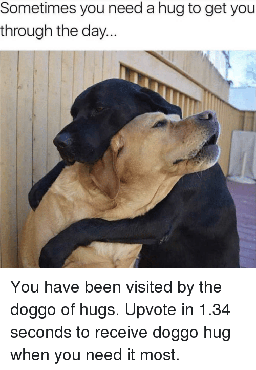 Funny, Been, and Doggo: Sometimes you need a hug to get you  throughn the day... You have been visited by the doggo of hugs. Upvote in 1.34 seconds to receive doggo hug when you need it most.