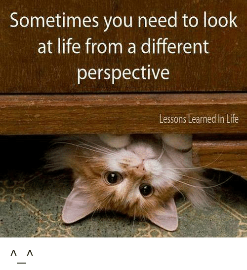 Senior Cat Quotes: Sometimes You Need To Look At Life From A Different