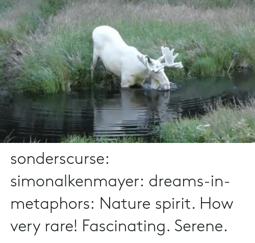 Tumblr, Blog, and Nature: sonderscurse: simonalkenmayer:  dreams-in-metaphors: Nature spirit.  How very rare!   Fascinating. Serene.