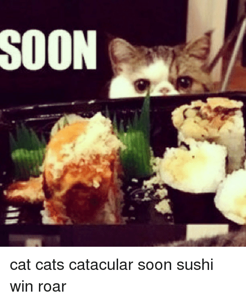 Soon Cat Cats Catacular Soon Sushi Win Roar Cats Meme On Meme
