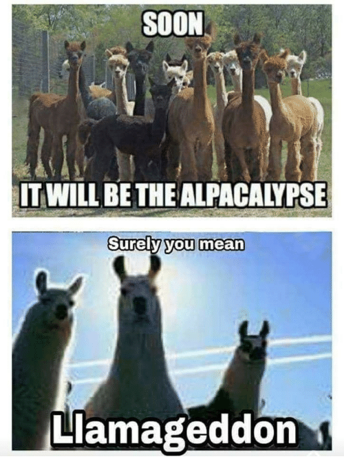 soon-it-will-be-the-alpacalypse-urely-you-mean-llamageddon-43254241.png
