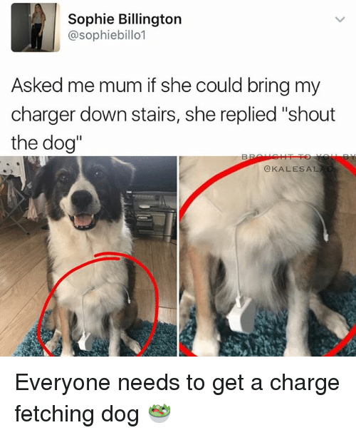 "Memes, 🤖, and Dog: Sophie Billington  @sophiebillo1  Asked me mum if she could bring my  charger down stairs, she replied ""shout  the dog''  OKALES AL. Everyone needs to get a charge fetching dog 🥗"