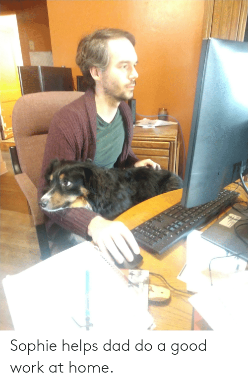 Dad, Work, and Good: Sophie helps dad do a good work at home.